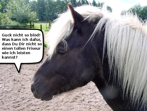 Pferdefrisur